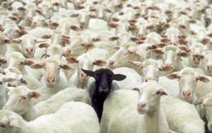 Picture showing one black sheep among many white sheep