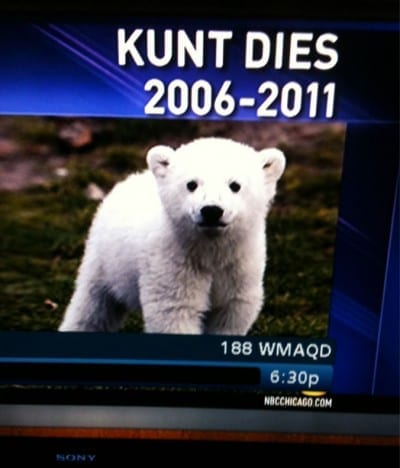 Name of polar bear is misspelt